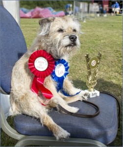 first-place-in-dog-show